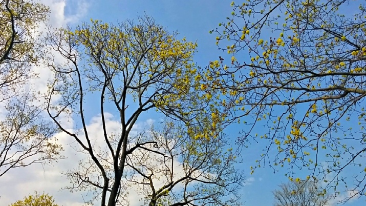 Trees in Spring 3c