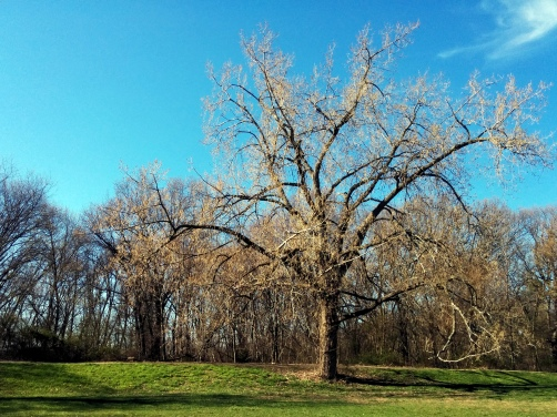 Grand Wisdom (Spring at Mystic River Reservation 1a)