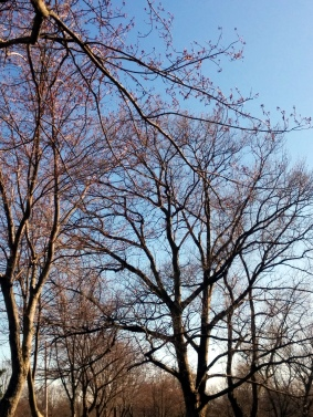 Trees in Spring 1b