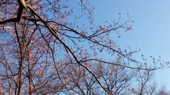 Trees in Spring 2d