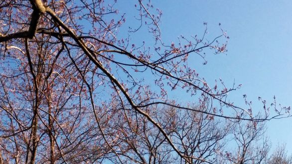 Trees in Spring 1e