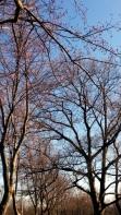 Trees in Spring 2b