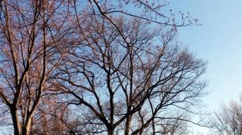 Trees in Spring 2c