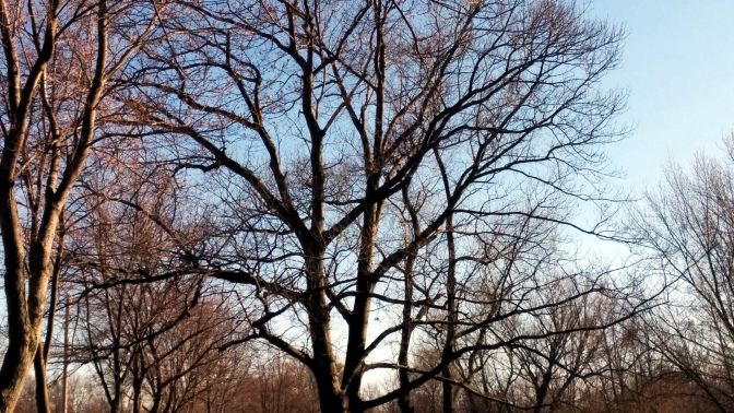 Trees in Spring 1