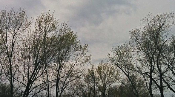 Trees in Spring 3b
