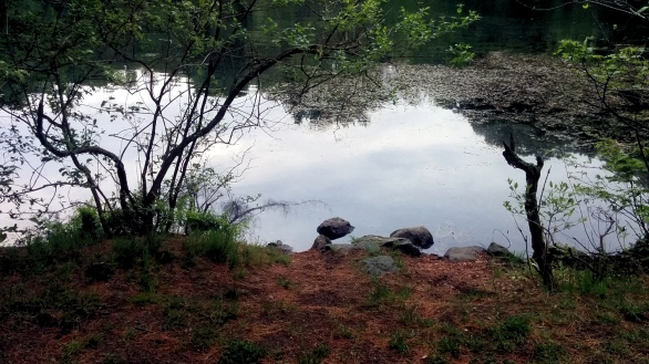 Hill's Pond in Spring 1