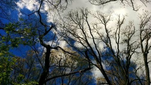 Treetops 1a