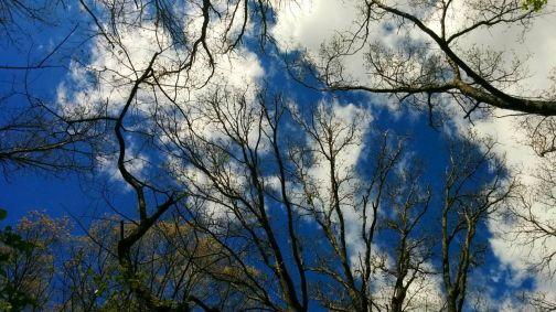Treetops 1b