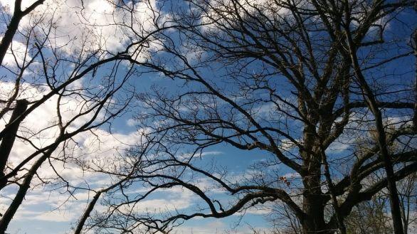 Treetops 2b