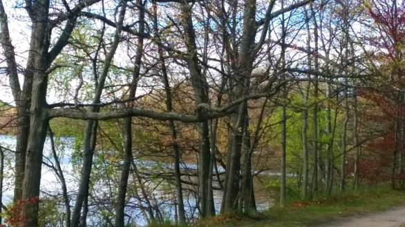 Mystic River Path in Mid-Spring A