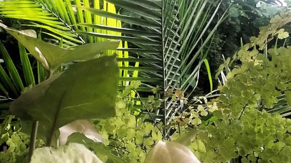 Patio Jungle 3