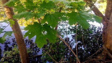 Leaf Palace 2