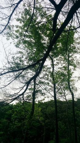 Treetops at Menotomy Rocks Park 1
