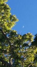 Tree and Crescent 1