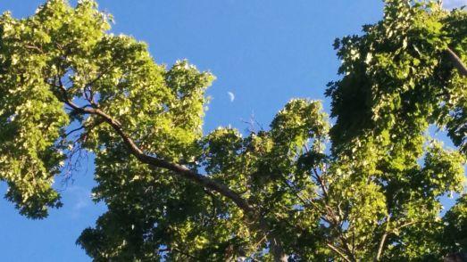 Tree and Crescent 2c