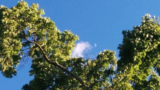 Tree and Crescent 2b