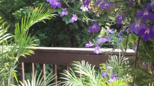 Purple on the Deck 1