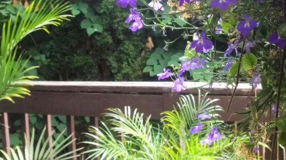 Purple on the Deck 2