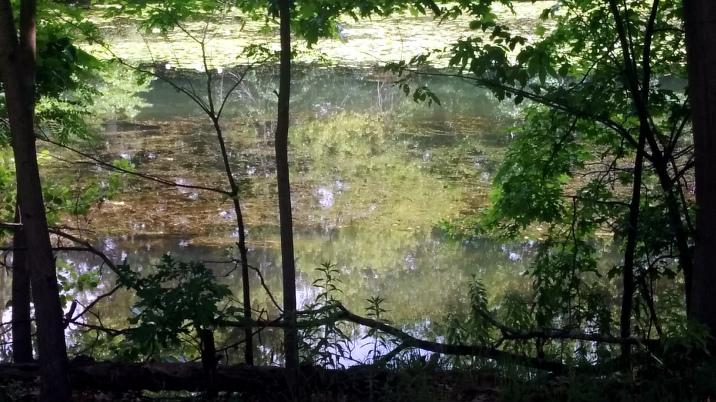 Mystic River: A Sunny Impression