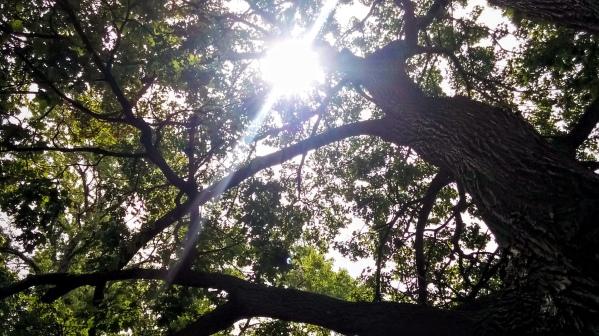 Cemetery Sun 3