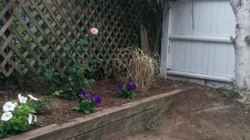 Backyard Corner 1