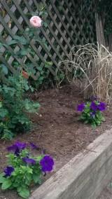 Backyard Corner 2