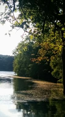 Portrait of a River (Summer) 2