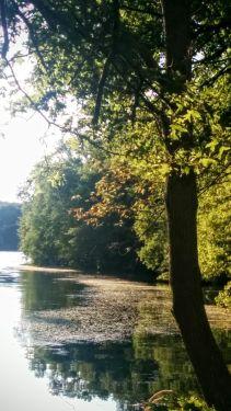 Portrait of a River (Summer) 3