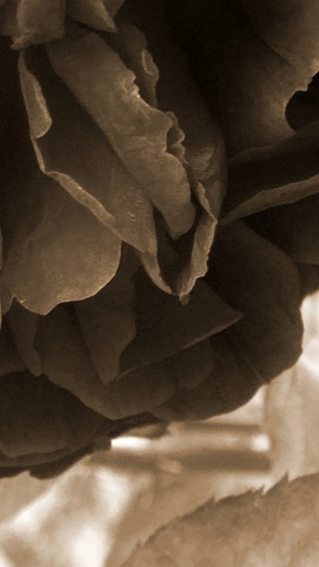 Rose Abstract 2 (Monochrome)