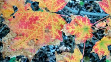 Impression of Fall 2