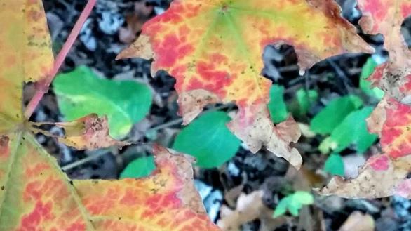 Impression of Fall 3