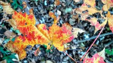Impression of Fall 1