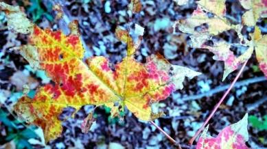 Impression of Fall 1 (alt)
