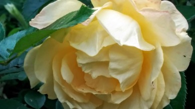 Blemished Yellow 2