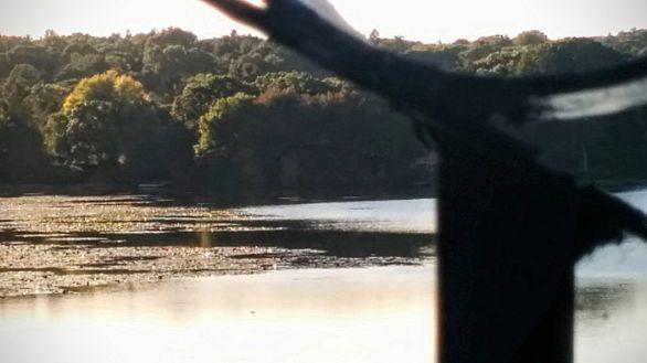 Bridge and Lake, with Bokeh 2