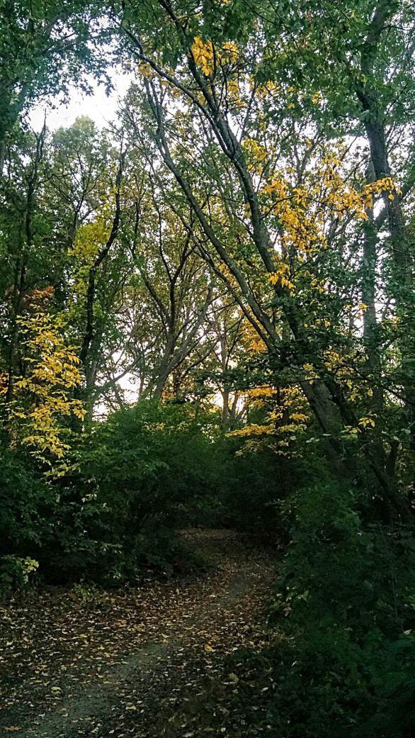 Yellow Leaf Road 1