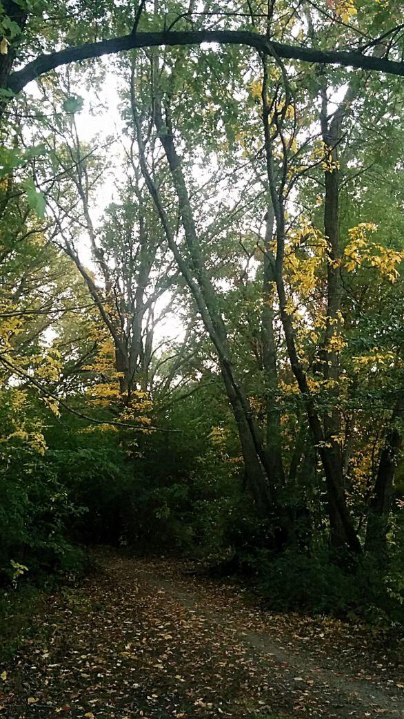 Yellow Leaf Road 2