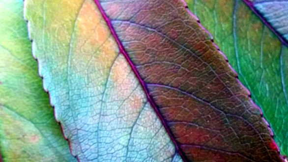 Foliage Treatment 2B