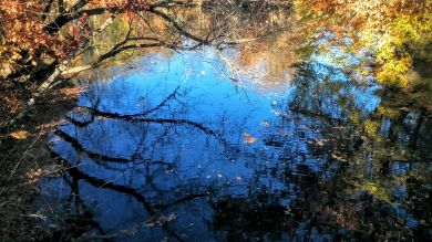 Alewife Brook in Autumn 1