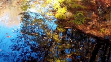 Alewife Brook in Autumn 3