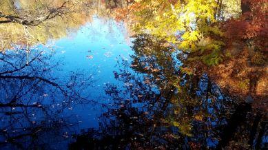 Alewife Brook in Autumn 2