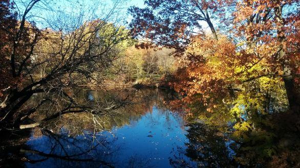 Alewife Brook in Autumn 5