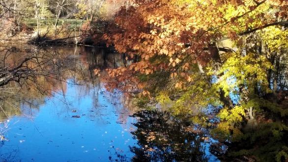 Alewife Brook in Autumn 4
