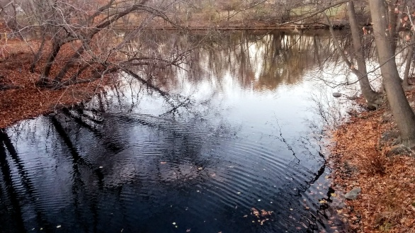 Alewife Brook in Autumn 7