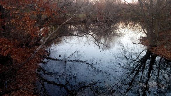 Alewife Brook in Autumn 6