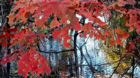 Autumn Palace 5