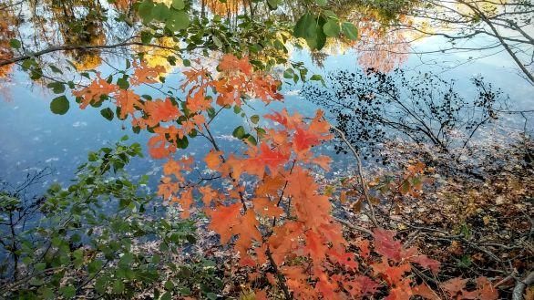 Autumn Palace 4