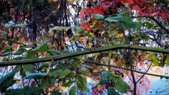Autumn Palace 6
