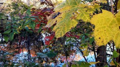 Autumn Palace 1