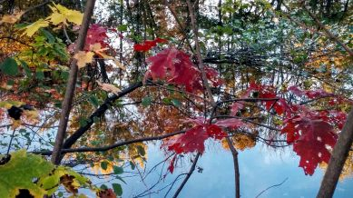 Autumn Palace 2